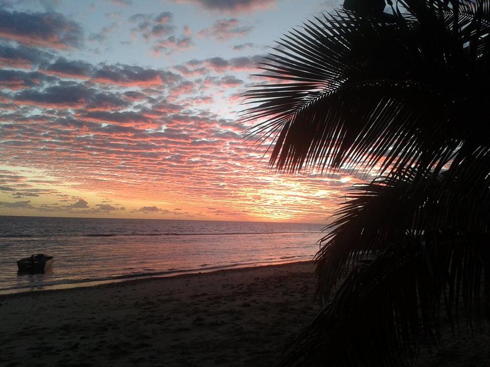 Palmiers et conifères de Nouvelle Calédonie